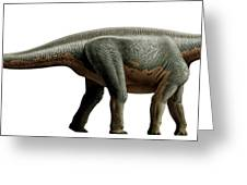 Shunosaurus, A Genus Of Sauropod Greeting Card