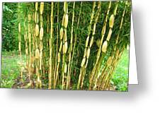 Shweeash Bamboo 2 Greeting Card