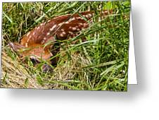 Shy Fawn In Meadow Greeting Card