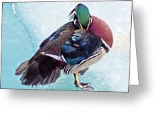 Shy Is A Wood Duck Greeting Card