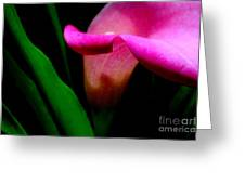Shy Lily Greeting Card