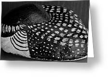 Shy Loon - Painted Rock - Seabird - One Of A Kind Greeting Card