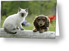Siamese Kitten And Dachshund Puppy Greeting Card