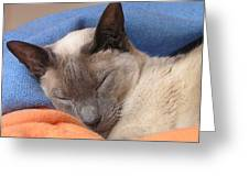 Siamese Snooze 2 Greeting Card
