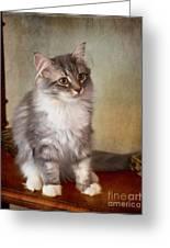 Siberian Forest Kitten II Greeting Card