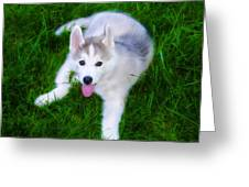 Siberian Huskie Greeting Card