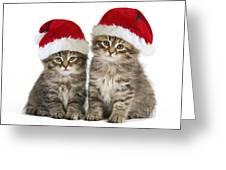 Siberian Kittens In Hats Greeting Card