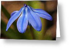 Siberian Squill Greeting Card