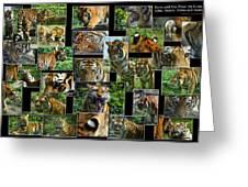 Siberian Tiger Collage Greeting Card