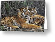 Siberian Tiger Cubs Endangered Species Wildlife Rescue Greeting Card