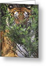 Siberian Tiger In Hiding Wildlife Rescue Greeting Card