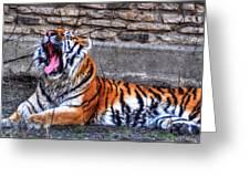 Siberian Tiger Nap Time Greeting Card