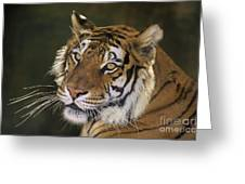 Siberian Tiger Portrait Endangered Species Wildlife Rescue Greeting Card