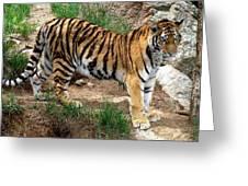 Siberian Tiger - Standing Greeting Card