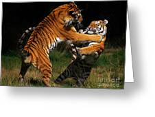 Siberian Tigers In Fight Greeting Card