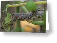 Side Of Big Brown Grasshopper Greeting Card
