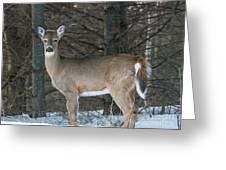 Side Of The Road Deer Greeting Card