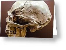 Side Profile View Of Human Skull   Greeting Card