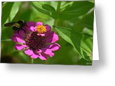 Side-saddled Bee Greeting Card