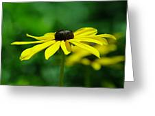 Side View Of A Yellow Flower Greeting Card