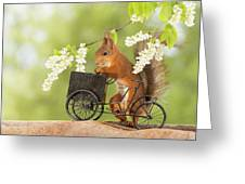 Side View Of Red Squirrel Playing Greeting Card