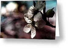 Side View Of White Flowers Greeting Card