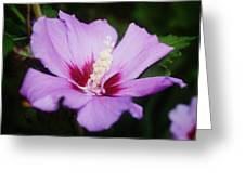 Side Yard Flower 1 Greeting Card