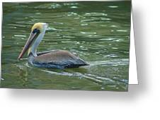 Sidelong Look From A Pelican Greeting Card by Sarah Crites
