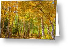Sierra Aspen Greeting Card