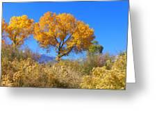 Sierra Gold Greeting Card