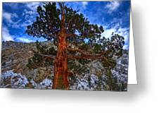 Sierra Pine Greeting Card