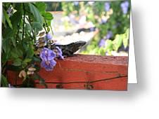 Siesta In Puerto Vallarta Greeting Card