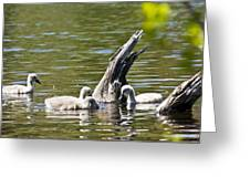 Signets Greeting Card