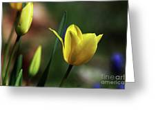 Signs Of Spring II Greeting Card