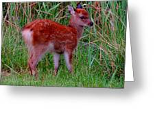 Sika Fawn 1 Greeting Card