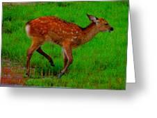 Sika Fawn 2 Greeting Card