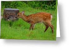 Sika Fawn 3 Greeting Card
