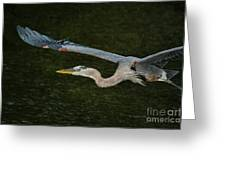 Silence In The Wings Greeting Card