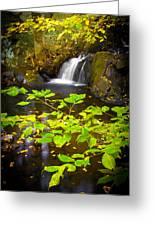 Silent Brook Greeting Card