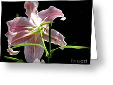Silent Peaceful Beauty Greeting Card