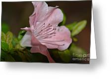 Silent Pink Photo B Greeting Card