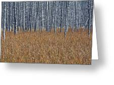 Silent Sentinels Of Autumn Grasses Greeting Card