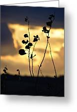 Silhouette At Sunset Greeting Card