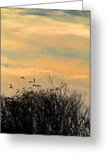 Silhouette Of Grass And Weeds Against The Color Of The Setting Sun Greeting Card