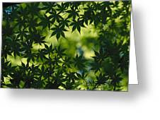 Silhouette Of Japanese Maple Leaves Greeting Card