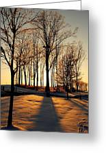 Silhouette Of Trees And Ice Greeting Card