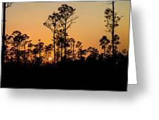 Silhouette Of Trees At Sunset Greeting Card