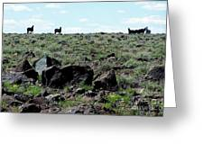 Silhouette Of Twin Peaks Wild Horses Ne California Greeting Card