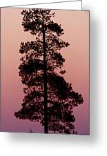 Silhouette Tree At Sunrise Greeting Card