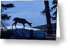 Silhouetted Deer Greeting Card